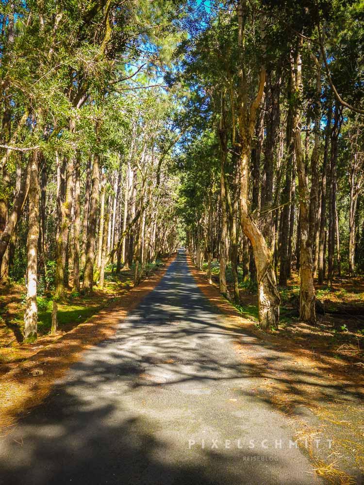 Beim Urlaub in Mauritius entdeckst du tolle Landschaften