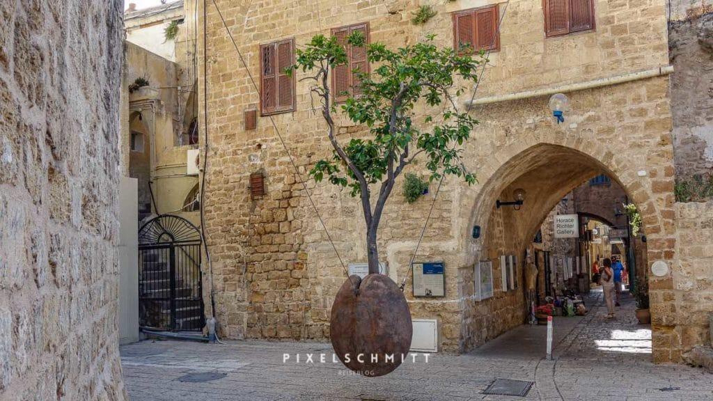 Der hängende Orangenbaum in der Altstadt von Jaffa