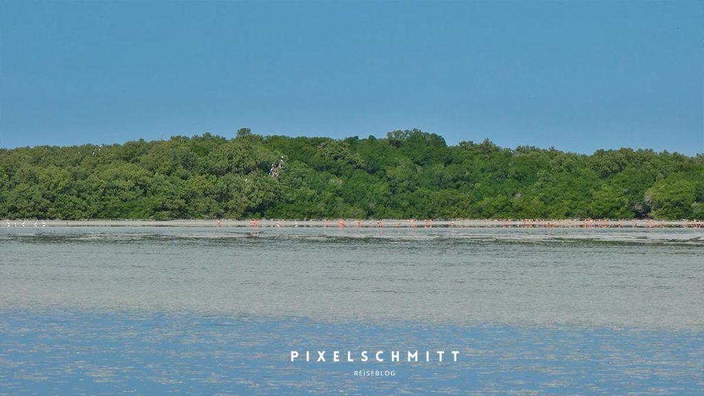 Flamingos in Celestune: Es waren echt wenige - uns sehr weit entfernt