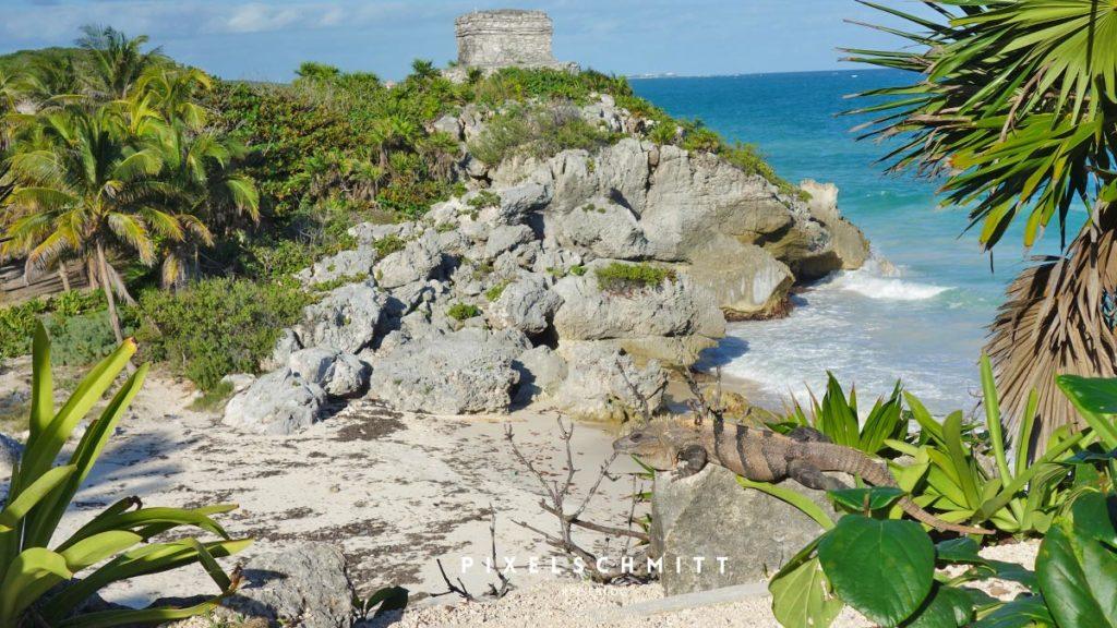 Tulum als Klischeebild: Ruinen am Strand und ein fotogener Iguana